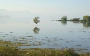 lago shkoder
